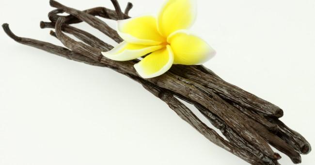 Sucre vanill recettes activit s pour enfants petits pieds petites mains - Vanille dessin ...